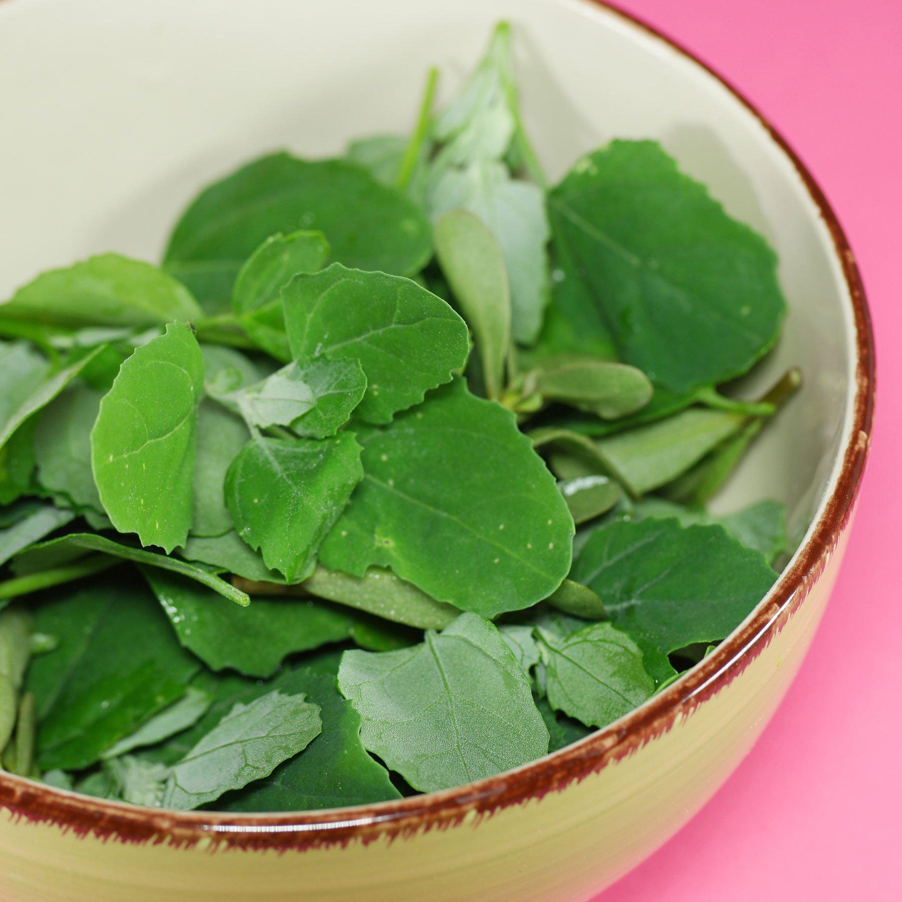Gänsefuß Salat