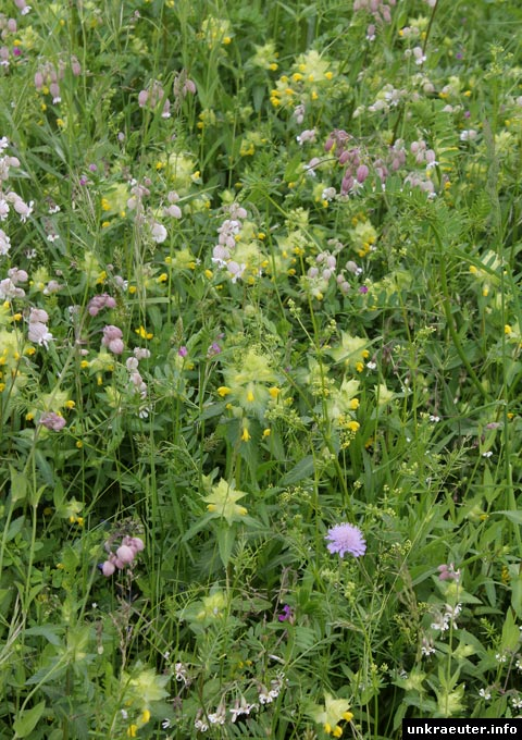 Blumenwiese