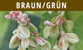 Braun-Gruen