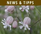 News-Tipps