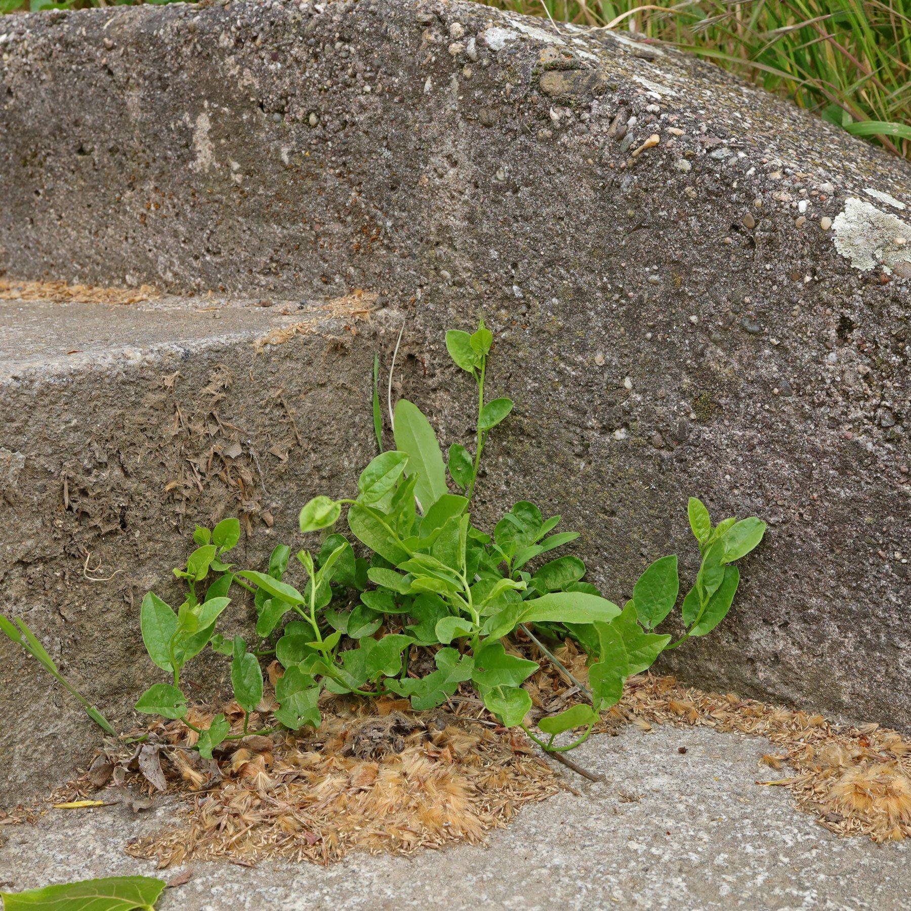Acker Winde auf Treppe