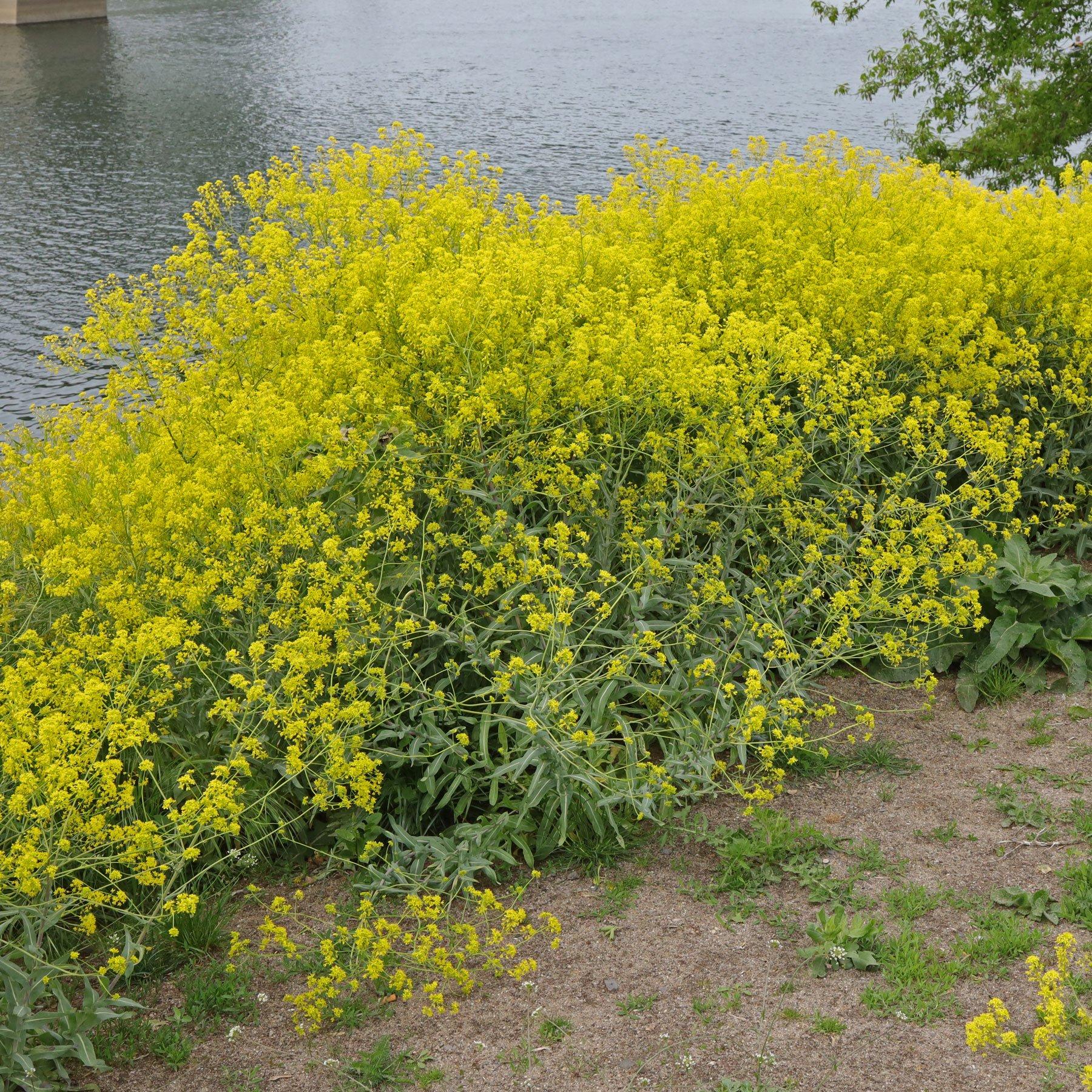 Färber-Waid Ufer